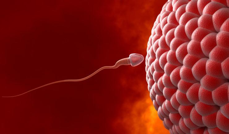 Natural insemination: sperm and human egg